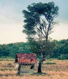 Lone Madura tree
